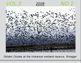 Vetscan Volume 3 No 2 | Golden Orioles at the Hokarsar wetland reserve at Srinagar